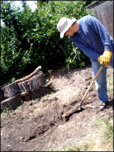 Acacia root 2