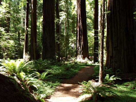 Founders grove